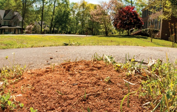 Controlling Fire Ants In Your Lawn Salisbury Post Salisbury Post